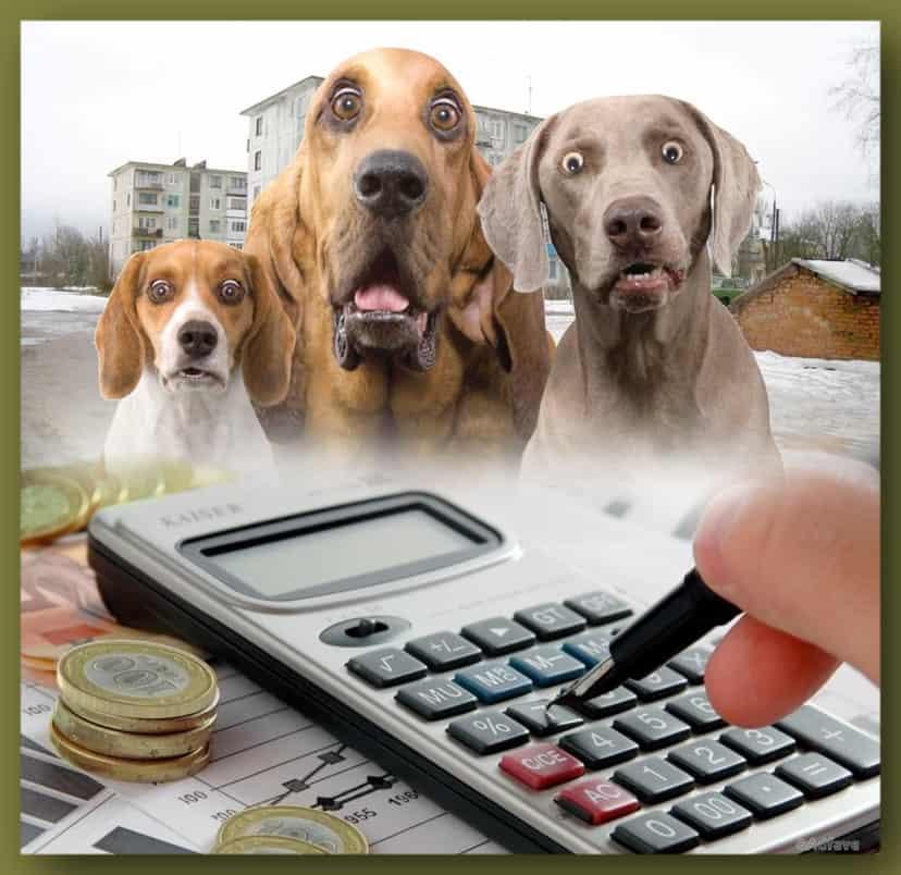Налог за владение собаками РБ